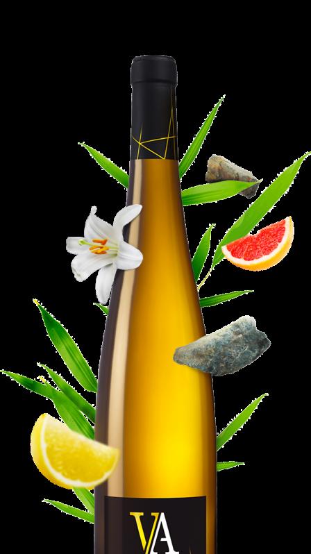 Qu'est-ce qu'un vin fruité?