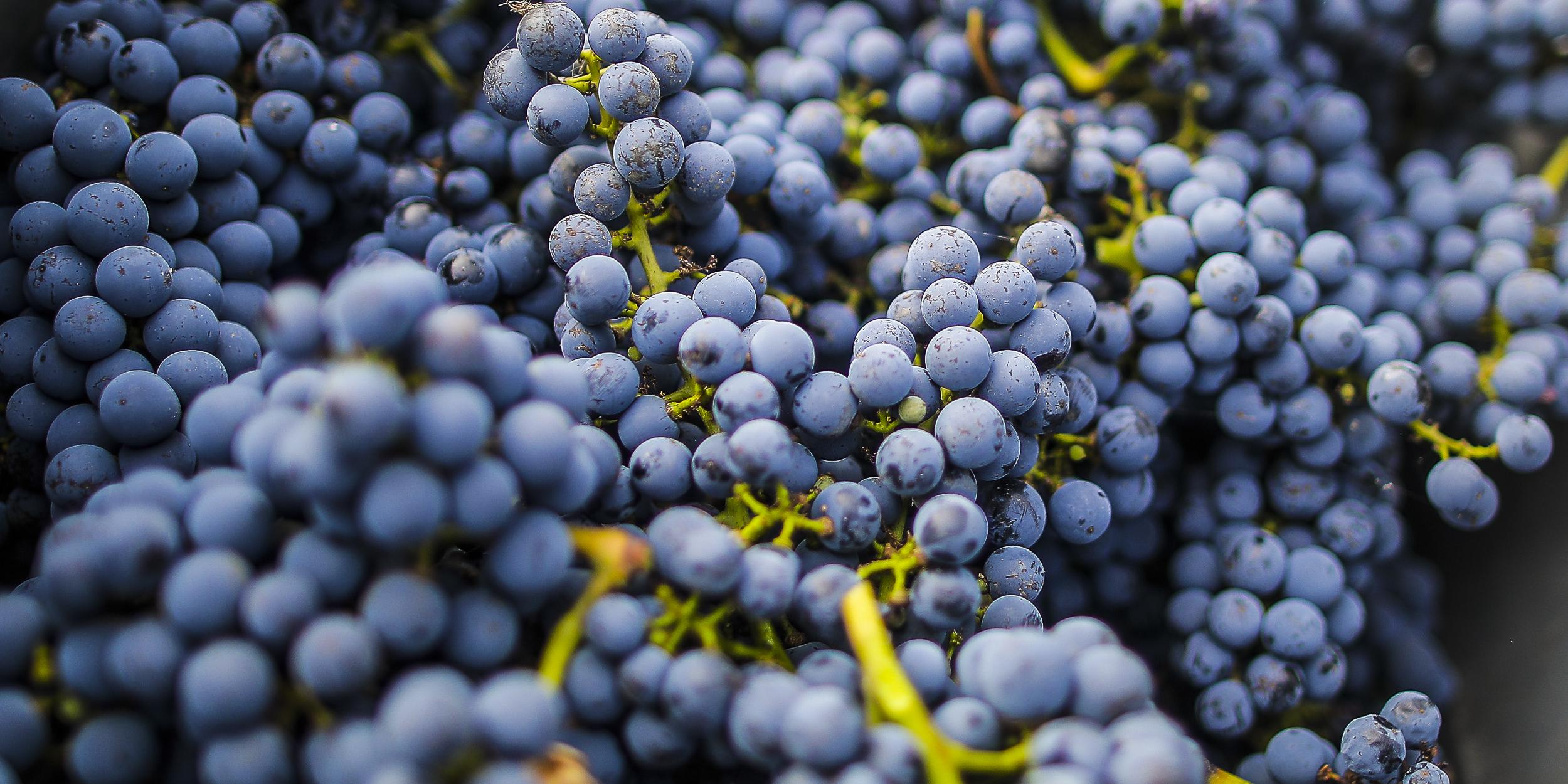 Quel est le meilleur vin du monde?