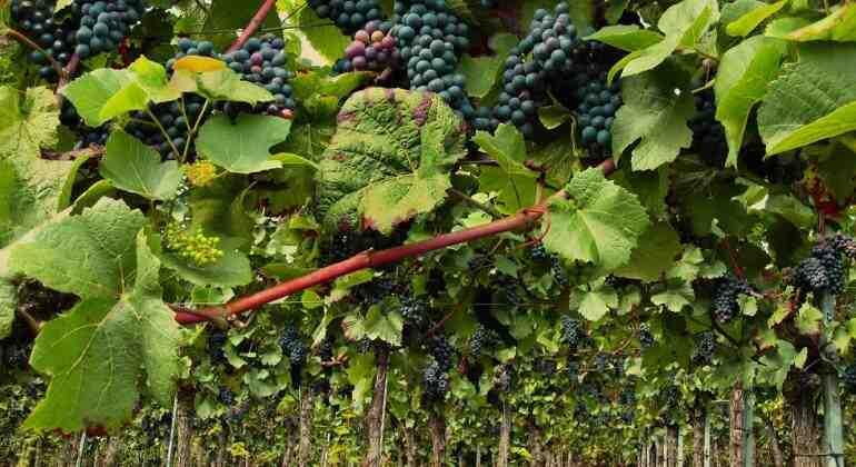 Quels vins de Bordeaux sont proposés?