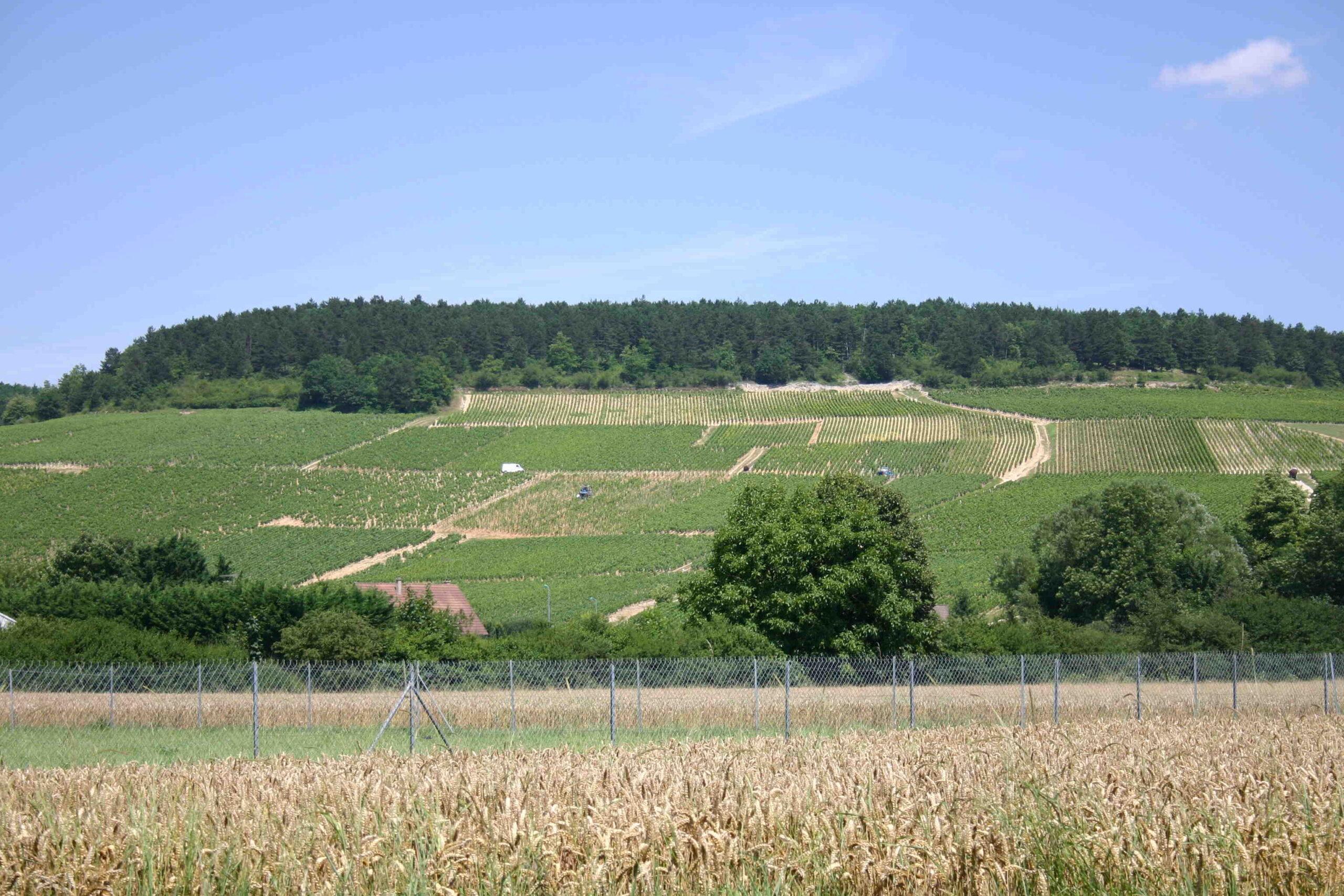 Quand boire un Savigny-lès-Beaune?