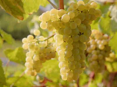 Quel est le vin le plus sec?