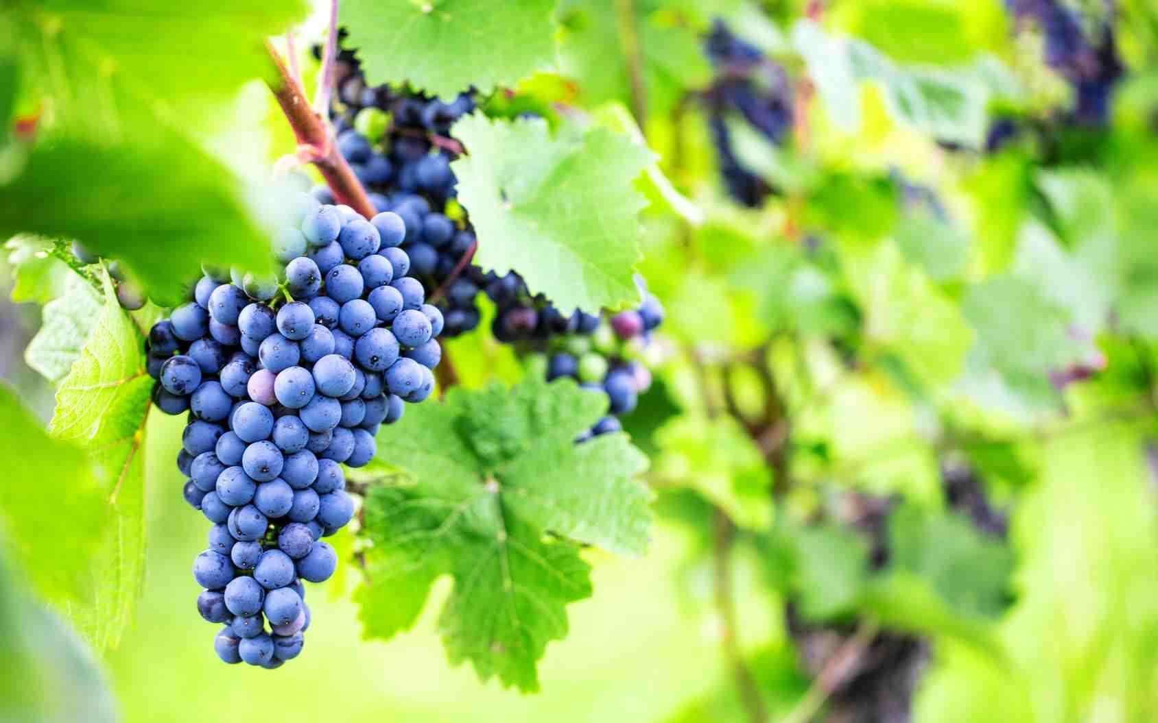 Quel vin pour le vin rouge ?