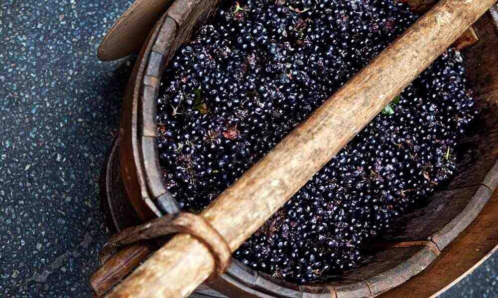Comment se fait la fabrication du vin ?