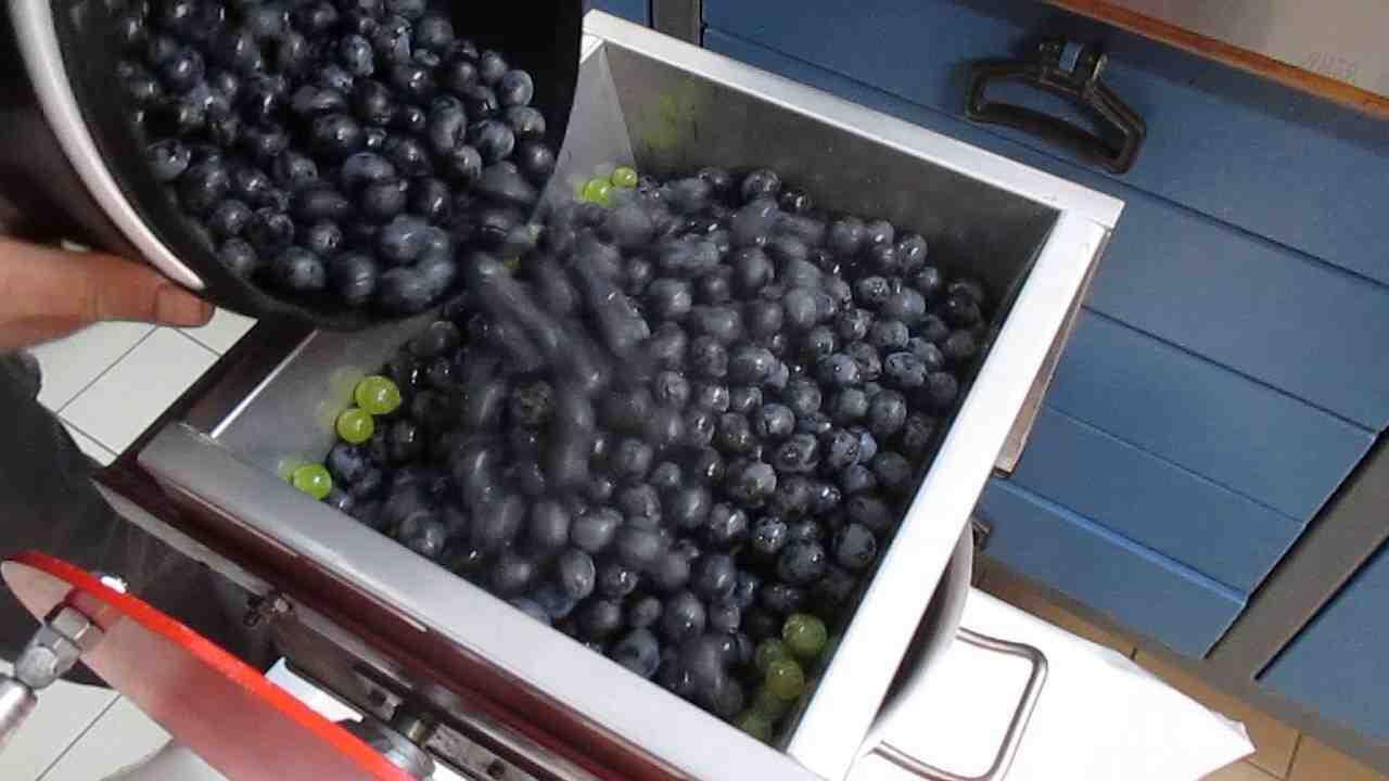 Quel raisin pour faire du vin blanc ?